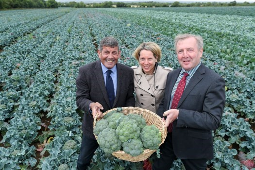 Ministers welcome supports for Irish vegetable growers