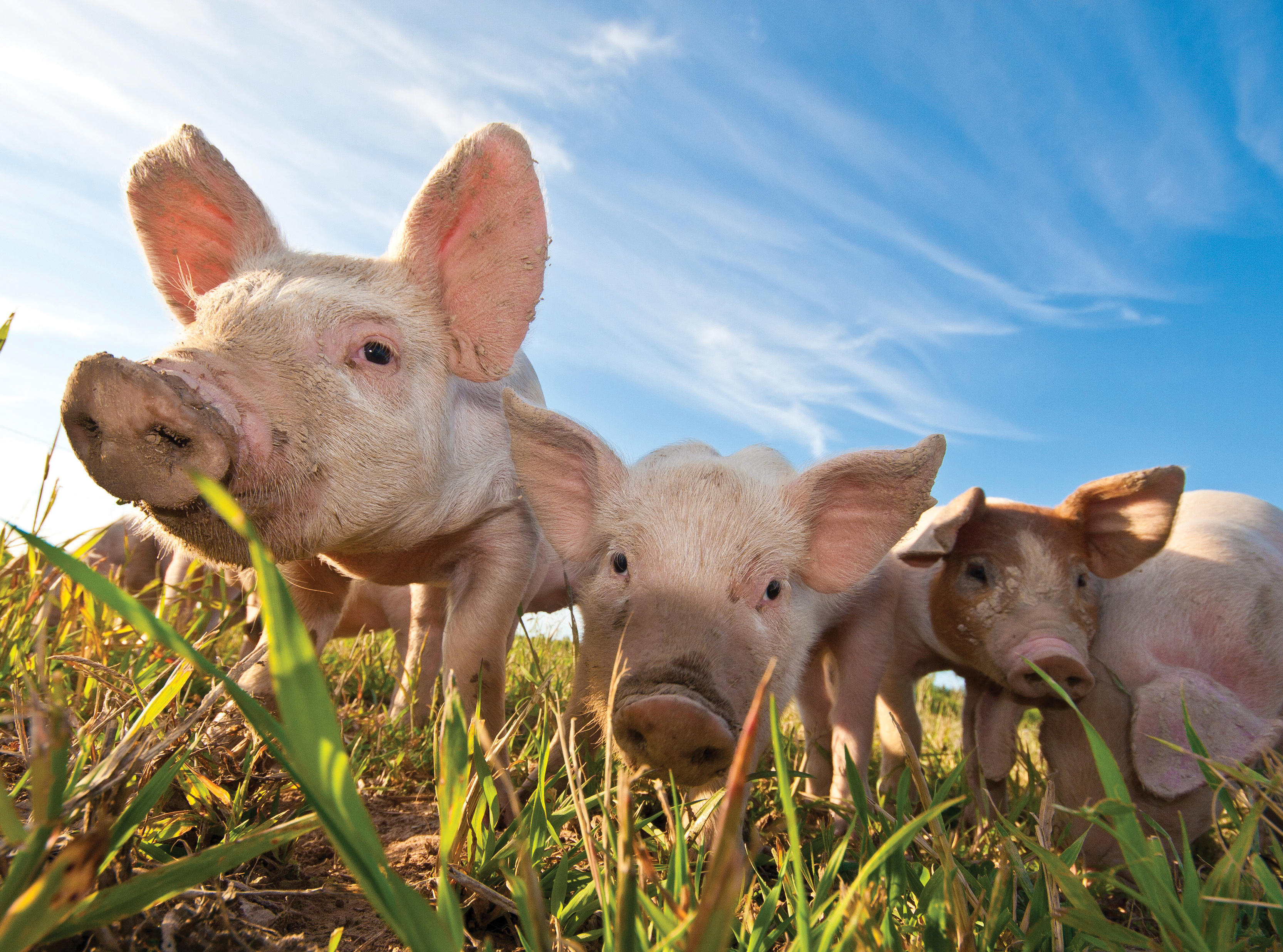 Creed announces funding of €500,000 for the roll out of a Lean Principles Programme for Pig Farmers
